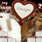 новый год кролика 2011