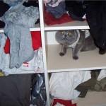 Ах, сколько лет подряд, открывая свой вещевой шкаф, я поражалась - как...