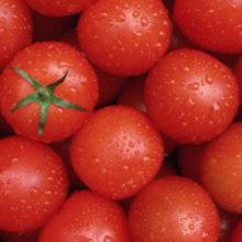 Выращивание, уход за помидорами черри на балконе, дома