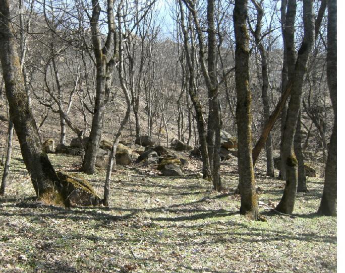 Волшебный лес друидов