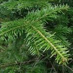 новогодняя елка купить