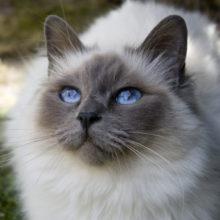 Коты — проводники в потусторонний мир