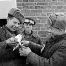 Как голуби помогали победить в ВОВ