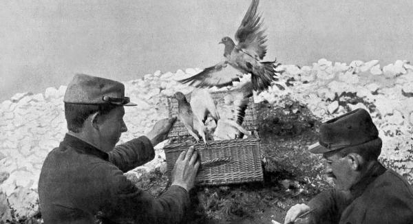 Голубеводы и голуби